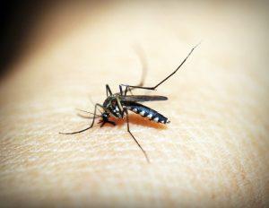 Prevenção contra a dengue, zika e chikungunya